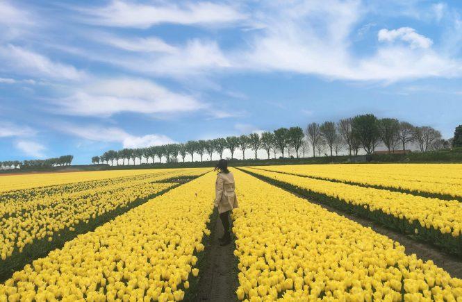 Mi visita en los campos de tulipanes en Amsterdam
