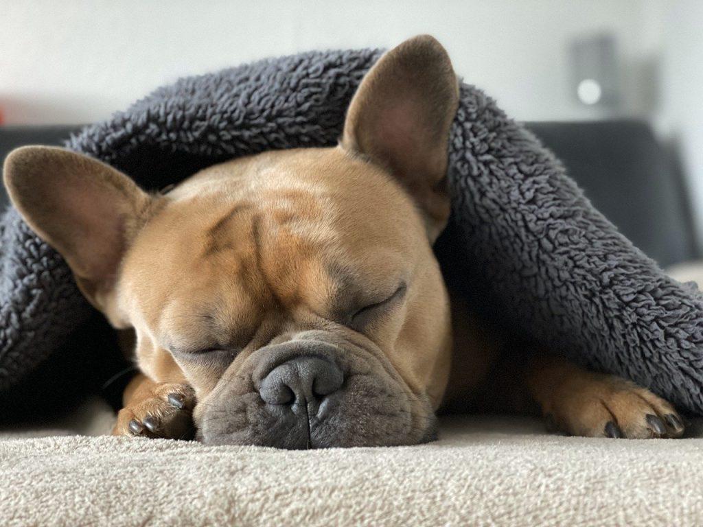 Duerme fortalece tu sistema inmune